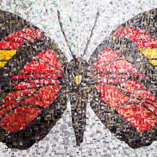 Mariposa Crimson Callicore