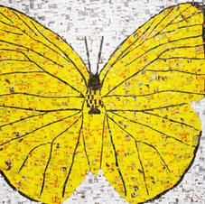 Mariposa Butter Cup