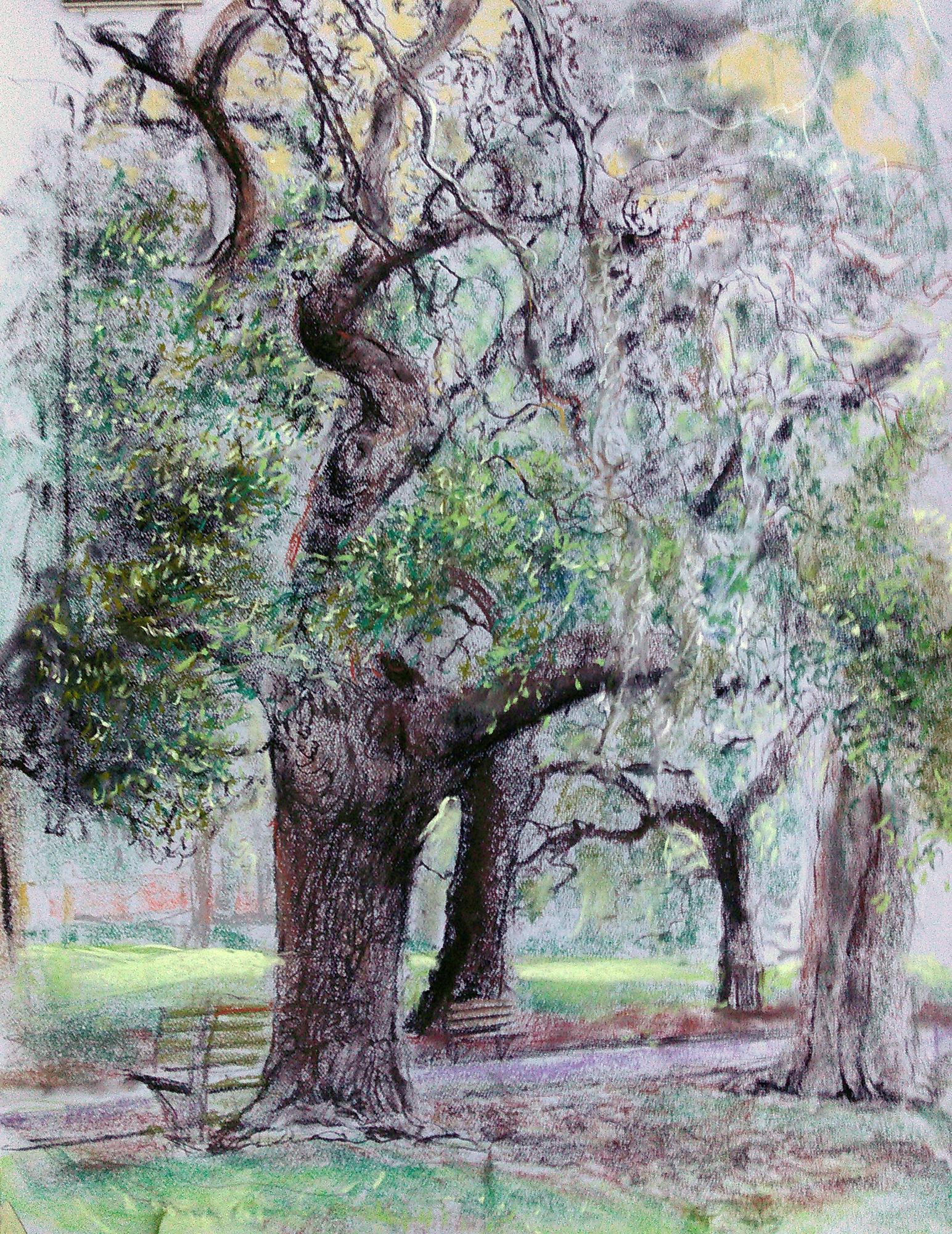 Bent Oak, Forsyth