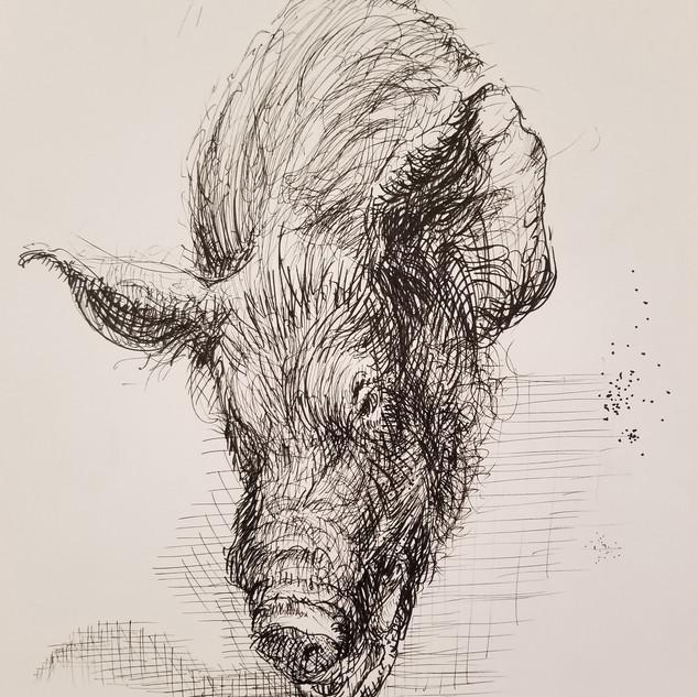 boar gestural