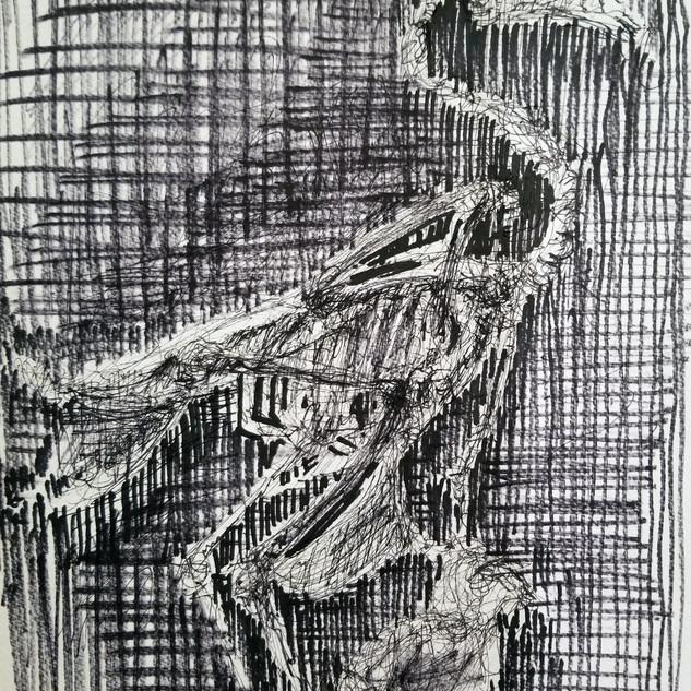 goose skeleton