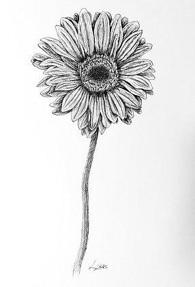 Botanical Ink Drawing 2