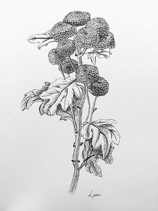 Botanical Ink Drawing 1