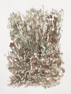 Bomen en stenen, 2010, aquarel, 36x48 cm.