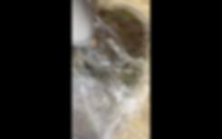 Screen Shot 2018-11-17 at 6.33.55 PM.png