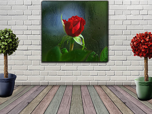 Big Red Rose And Rain Drops Wall Art Decor Picture Painting Print 31 by 31