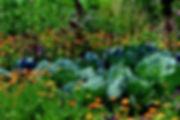 Mischkultur-Gemüsegarten-min.jpg