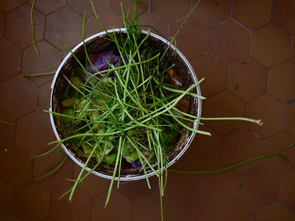 Compost : le cycle de la vie