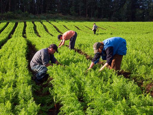 Crea-PR fiscaliza plantio da Safra Verão na região oeste paranaense