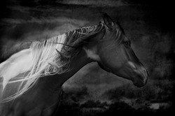 Badlands Horse 2011 #12