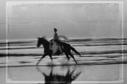 Horse on the Beach #20 2017-11-18