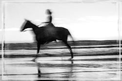 Horse on the Beach #16 2017-11-18