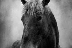 Badlands Horse 2011 #18