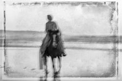 Horse on the Beach #32 2017-11-18