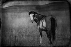 Badlands Horse 2011 #20