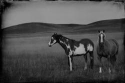 Badlands Horses 2011 #5