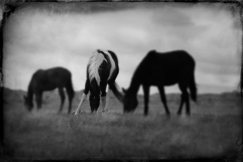 Badlands Horses 2011 #8