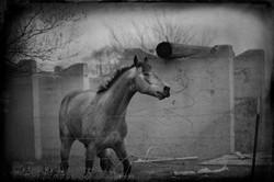 Badlands Horse 2011 #23