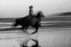 Horse on the Beach #9 2017-11-18