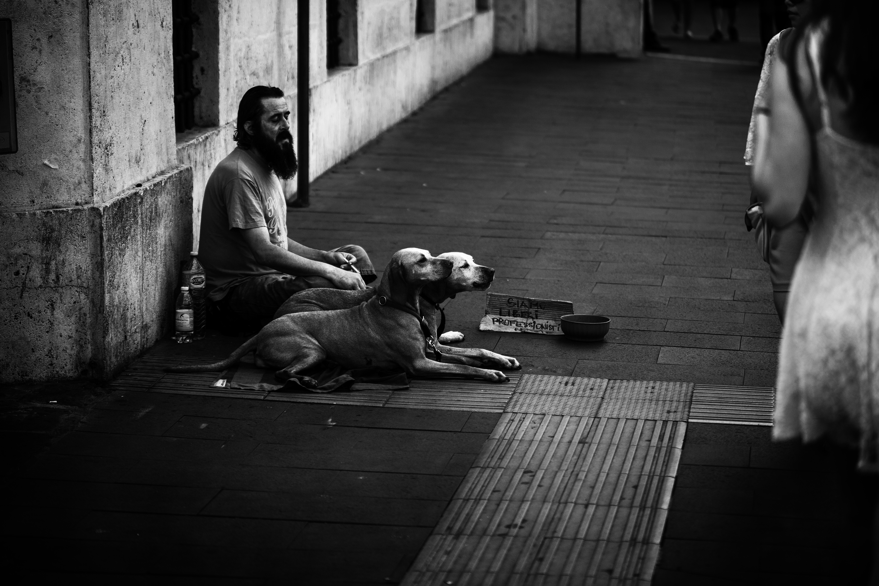 Homless Man with His Dogs