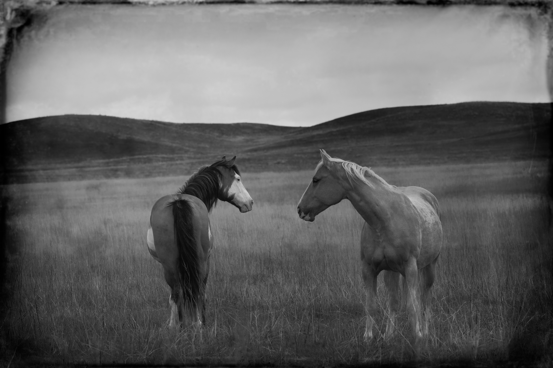 Badlands Horses 2011 #4