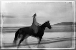 Horse on the Beach #11 2017-11-18