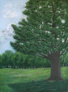 Pine island tree