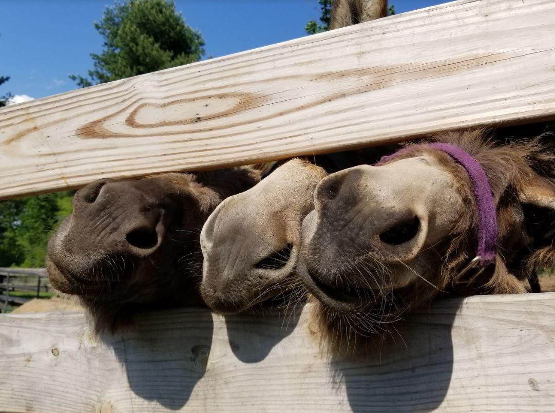 donkey snoots - Copy.JPG