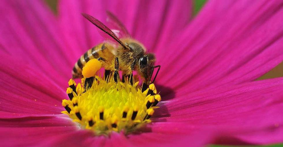 abeilles miel exobee