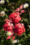 fleur décorative, papier découpé, perles