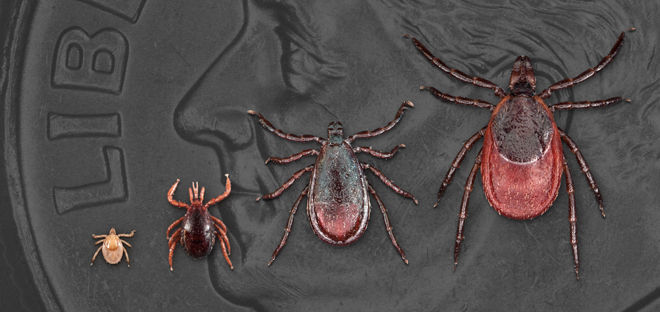 Lyme Disease Specialist