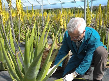 La sostenibilità dell'Aloe