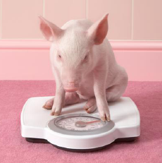 Can we fatten the pig by weighing it?