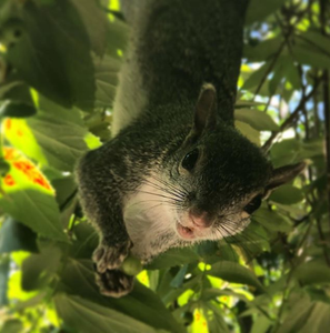 Squirrel - Playa del Carmen