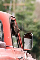 Dog Truck