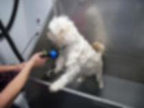 Sugarland Mobile Dog Grooming