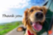 Thankyou-dog.jpg
