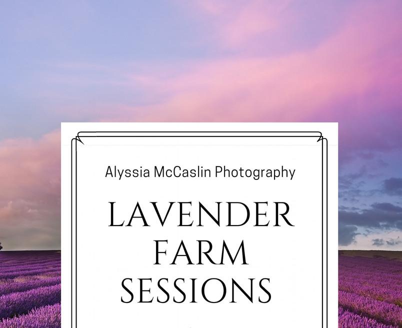 lavender session