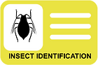 INSECT IDENTIFICATION CARD.png