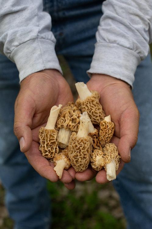 Morel Mushrooms 20140506-60.jpg