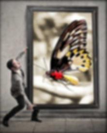 תמונת-פרפר-על-הקיר.jpg