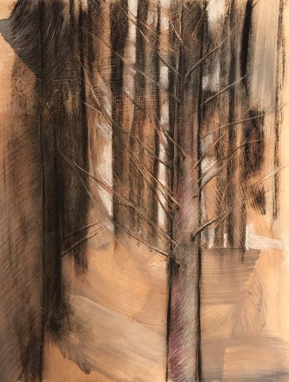 woods outside my window