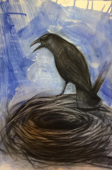 Crow and empty nest 2