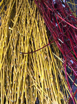 willow and red twig dogwood