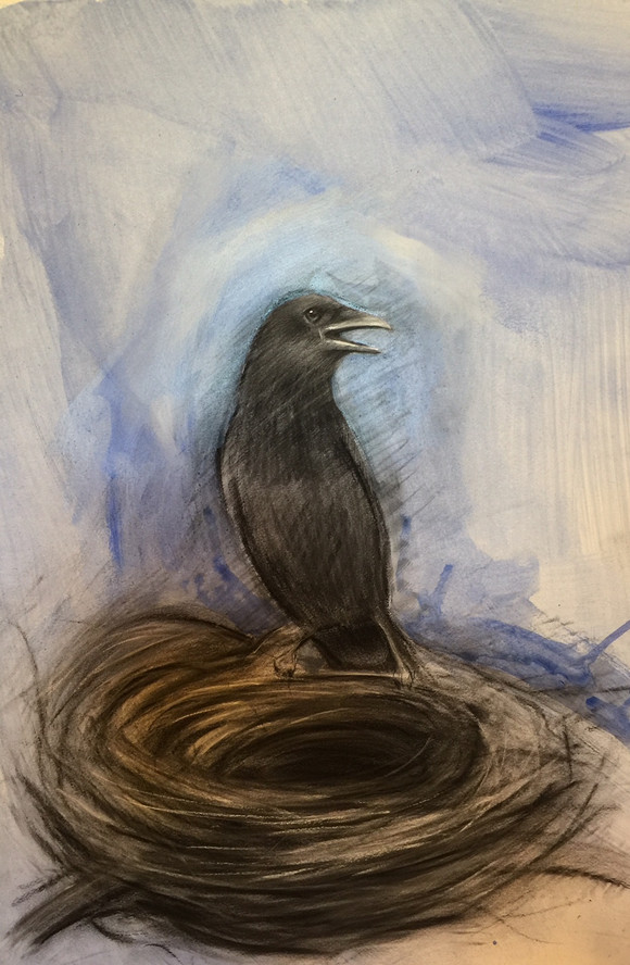 Crow and empty nest
