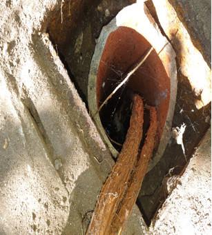 Tree root ingress drain blockage