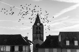 Sauvetrre - Place aux aracdes