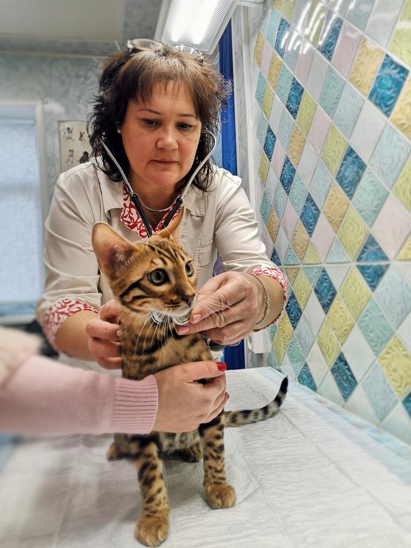 """Сеть ветеринарных клиник """"БАСТИС"""""""