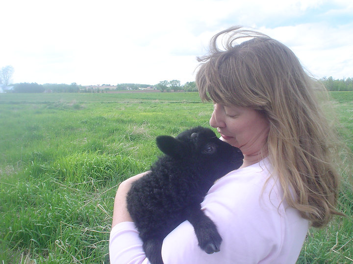 Baby Lerwick with farm owner, Wheely Wooly Farm