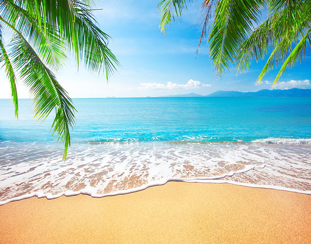 Palm and tropical beach.jpg